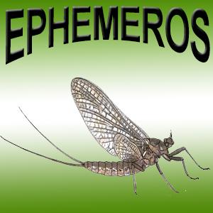 icone_ephemeros